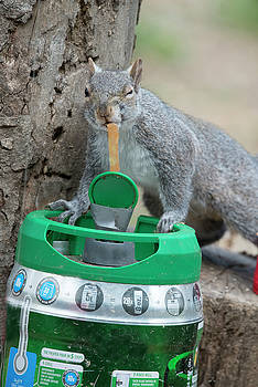 Drinking straight from the keg by Dan Friend