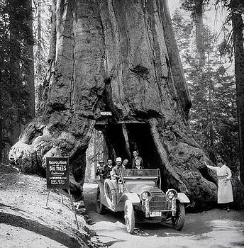 Daniel Hagerman - DRIVING THRU WAWONA SEQUOIA - 1918