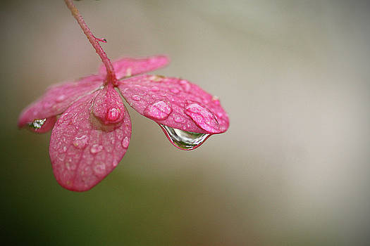 Droplet by Kelly Lucero