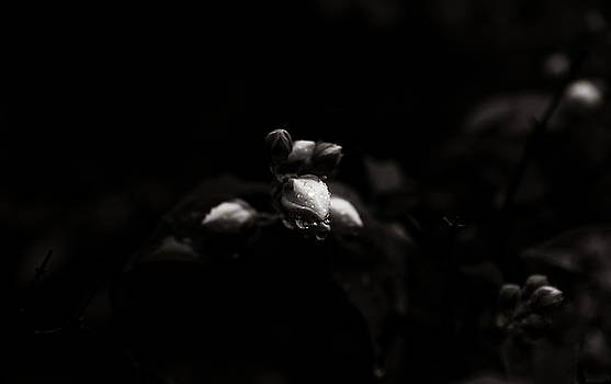 Droplets 7 by Cendrine Marrouat