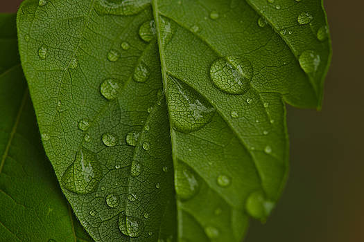Droplets 8 by Cendrine Marrouat
