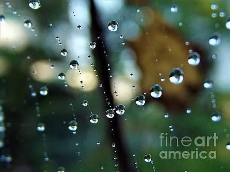 Droplets in a Row by Dee Winslow
