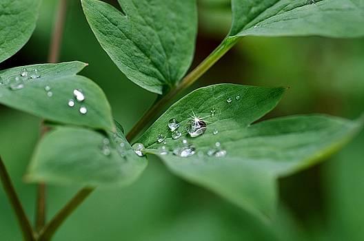 Droplets  by Stephanie Calhoun