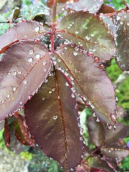 Drops by Marge Healy