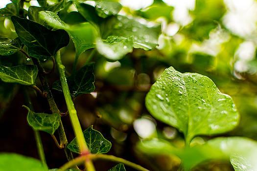Drops of Rain by Nathan Hillis