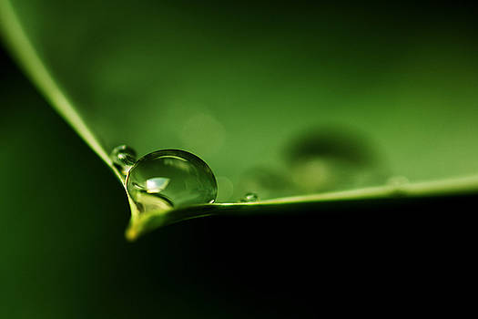 Drops on a leaf by Bob Daalder