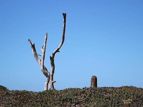 Gary Canant - Drought Resistant Trees