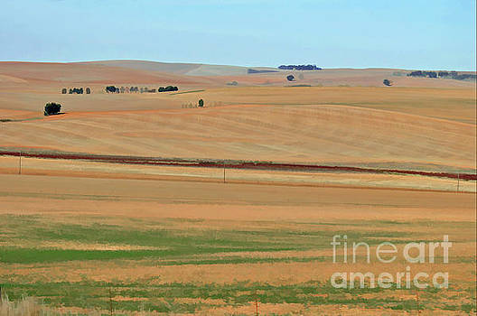 Drought-stricken South African farmlands - 2 of 3  by Josephine Cohn