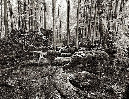 Druidenhain by James Clancy