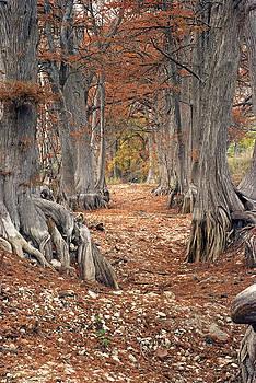 Robert Anschutz - Dry Creek