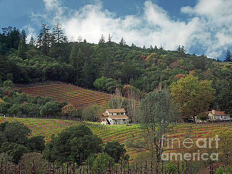 Dry Creek Valley Vineyard  by Jacklyn Duryea Fraizer