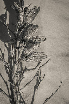 Dry Desert by Racheal Christian