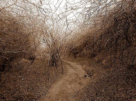 Dry forest by Vishakha Bhagat