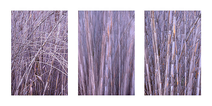 Dry Reed Collage by Alexander Kunz