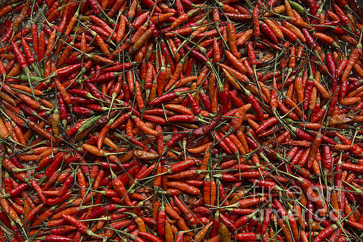 Drying Red Hot Chili Peppers by Nola Lee Kelsey