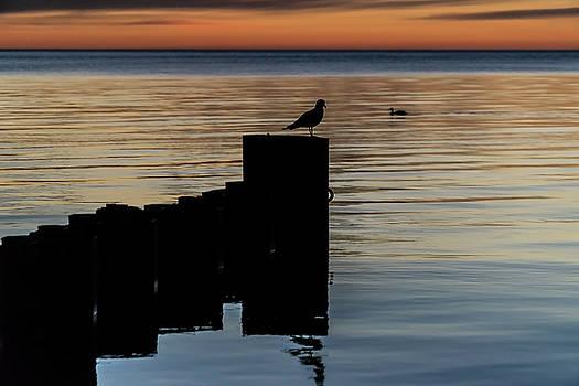 Dual Birds at sun rise  by Sven Brogren