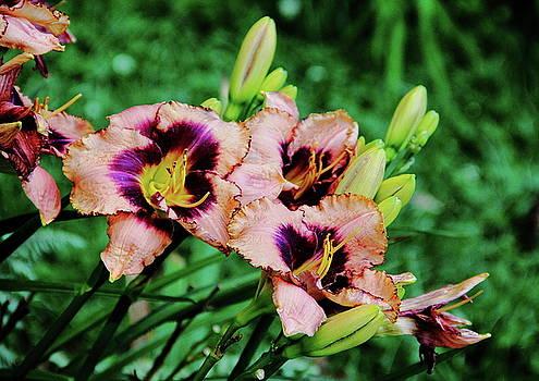 Allen Nice-Webb - Dual Color Lily