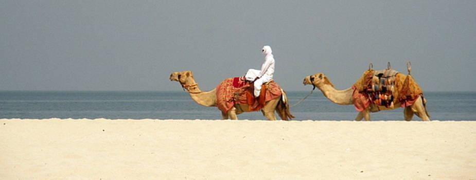 Dubai camels by Keira MacVinish