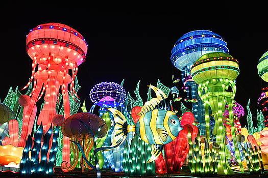 Dubai - Garden Glow by Hanza Turgul