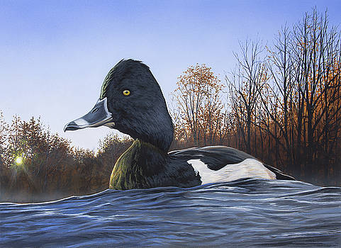 Ring-necked Duck by Anthony J Padgett