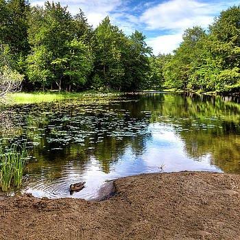 Duck at Covewood by David Patterson
