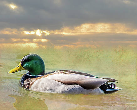 Duck at Sunset by Leticia Latocki