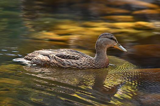 Duck by Atul Daimari