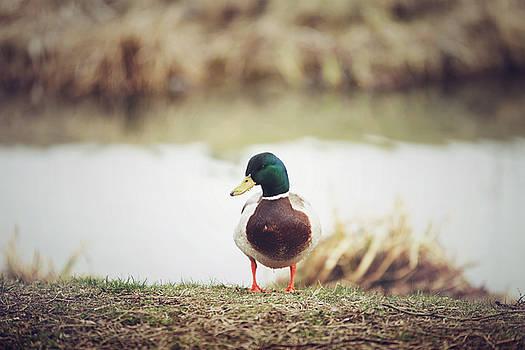 Duck by Cindy Grundsten