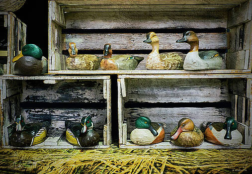 Duck Decoy Display by Brian Wallace