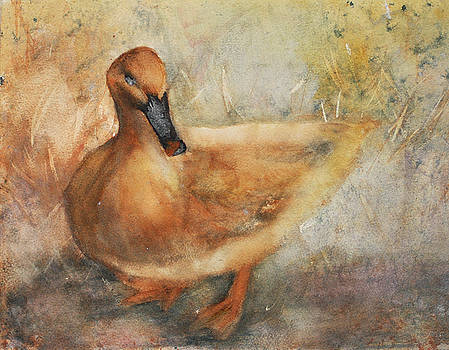 Duck by Denice Palanuk Wilson