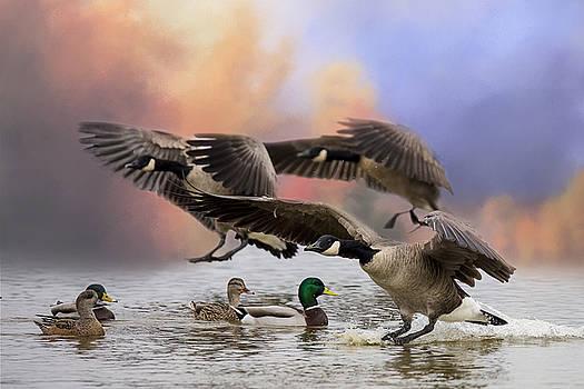 Randy Hall - Duck Ducks 2