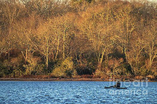 Duck Hunter by Steven Natanson