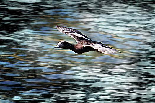 Duck Leader by Brad Thornton