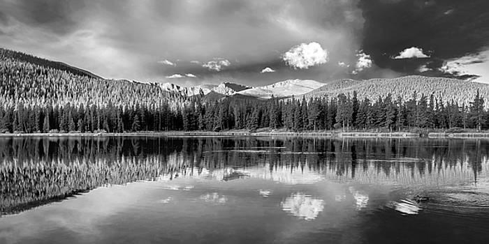 Duck on Echo Lake by Lynn Palmer