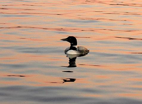 Duck on the Water by Robert Morin