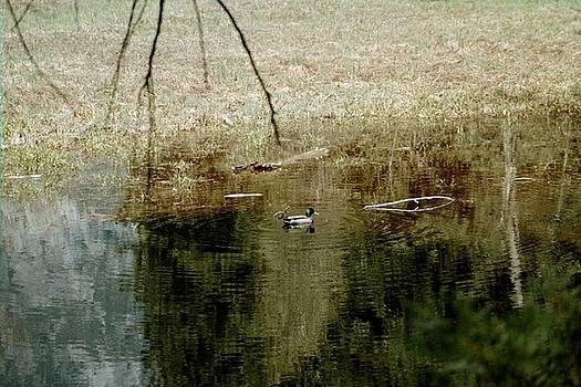 Duck Pond by Hazel Rice