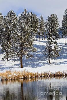 Steve Krull - Duck Pond in Colorado Snow