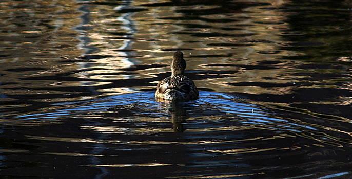 Anne Babineau - duck tale
