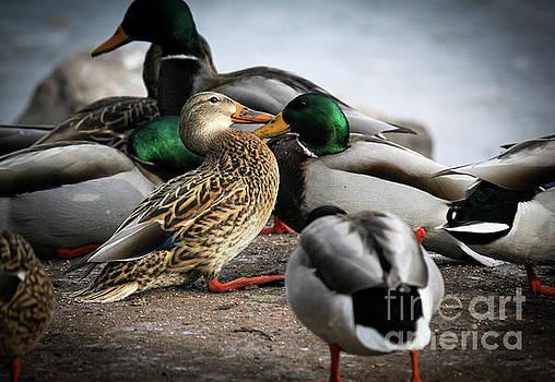 Duck Vignette by Linda Joyce