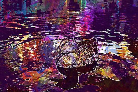 Duck Water Lake Nature Waters  by PixBreak Art