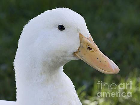 Duckie by Tara Lynn