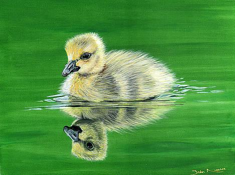 Duckling by John Neeve