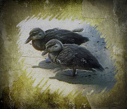 Duckling Siblings by Brian Wallace