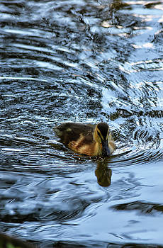 Duckling Swimming Through Abstract Reflection by Maria Keady