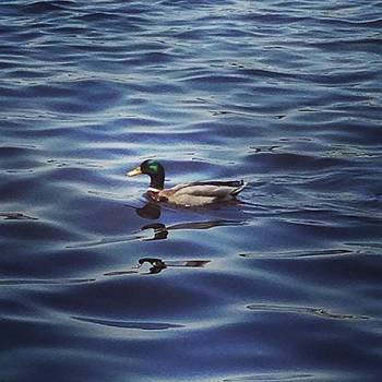 #ducks #ducksunlimited #lake by Crystal Hammond