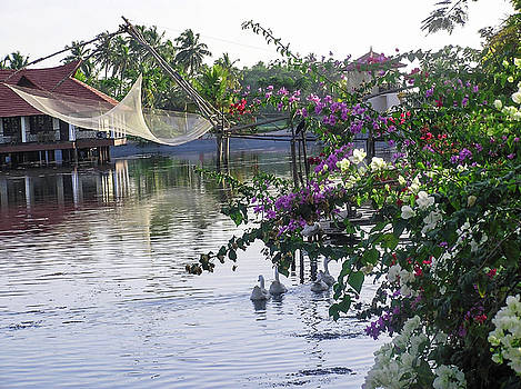 Ducks, fishing net, flowers, water and cottages make a great pho by Ashish Agarwal