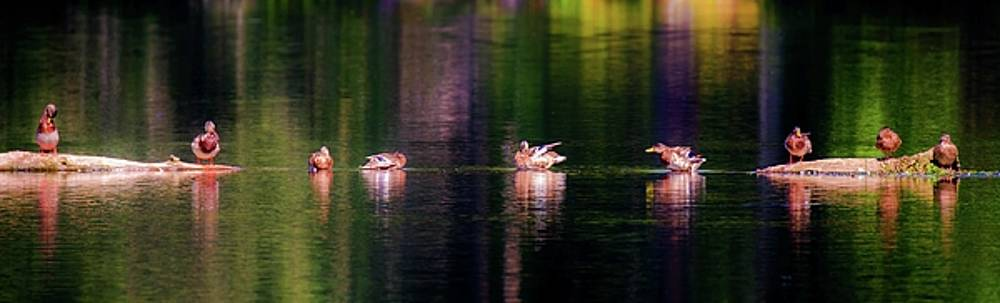 Ducks in a Row by Sherman Perry