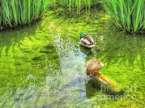 Ducks In The Pond by Yury Bashkin