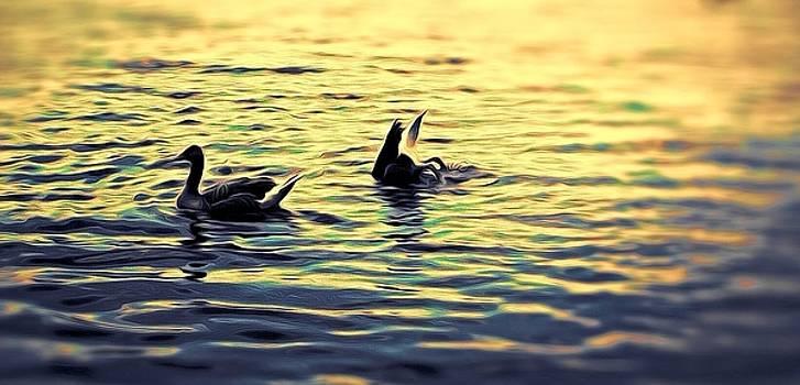 Ducks In The Water by Emmanuel Varnas