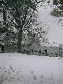Ducks in Winter by Sherri Williams